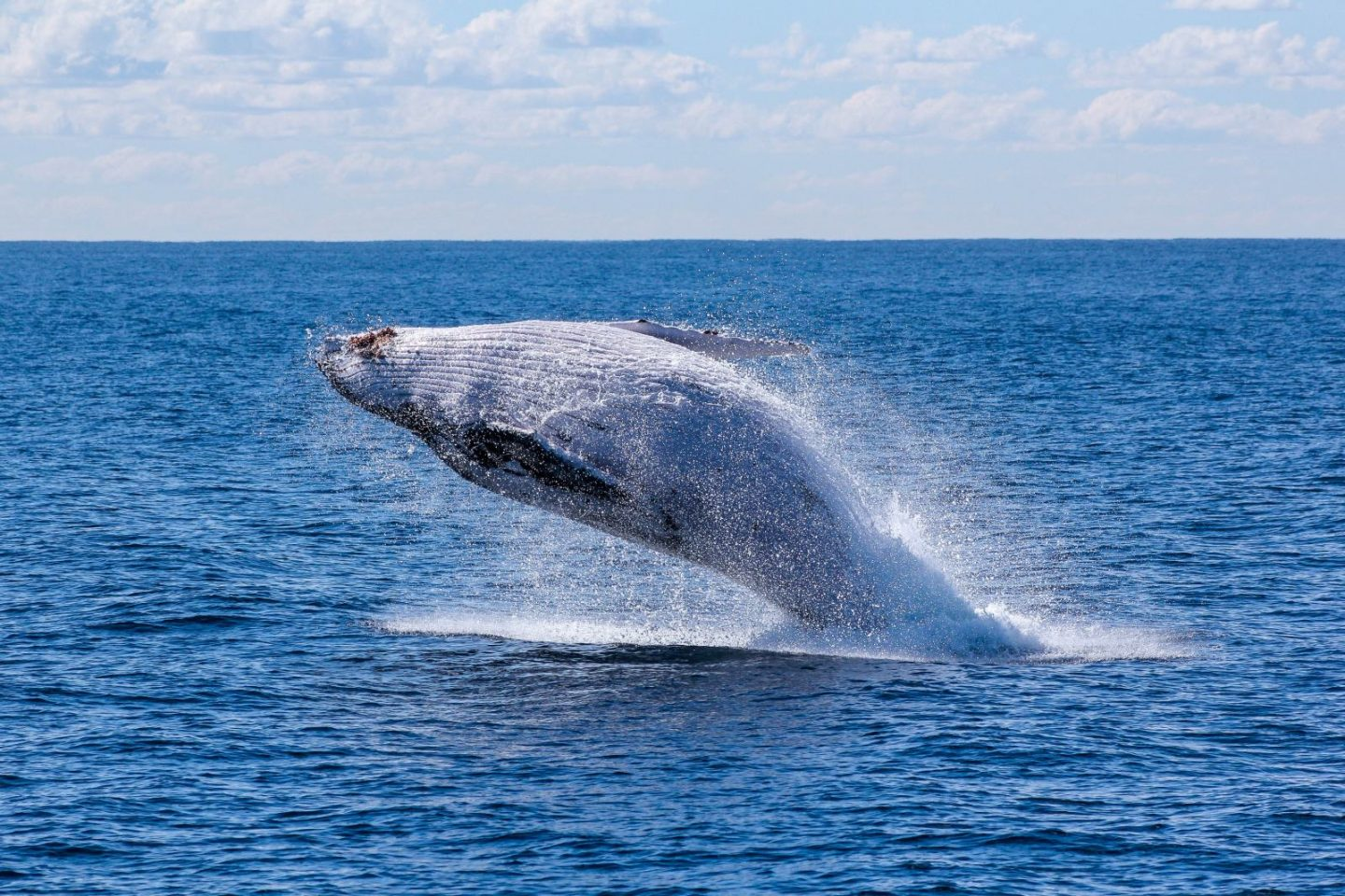 The whale watching season is ON!